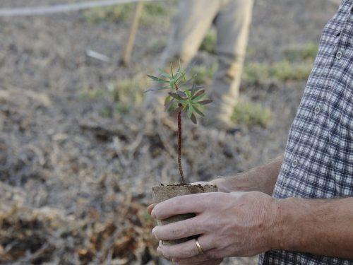 Azioni di Island Restoration a Pianosa e Giannutri
