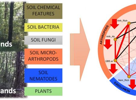 Impatti della specie aliena invasiva Robinia pseudoacacia  su comunità vegetale e comunità biotiche del suolo.