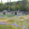 PROPOSTA DI TESI: Flora Anfiteatro Romano di Arezzo